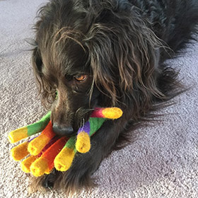 Cute brown dog with colorful toy