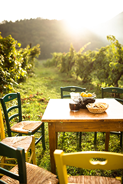 Table in vineyard with food